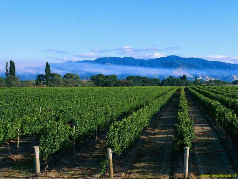 You wine magazine vigne paesaggi ed enoturismo in for Piani economici della cabina di ceppo