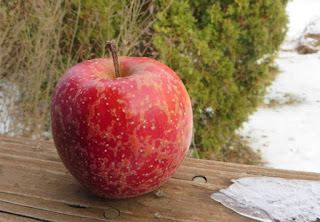 Red apple with crackles of russet and large lenticel dots