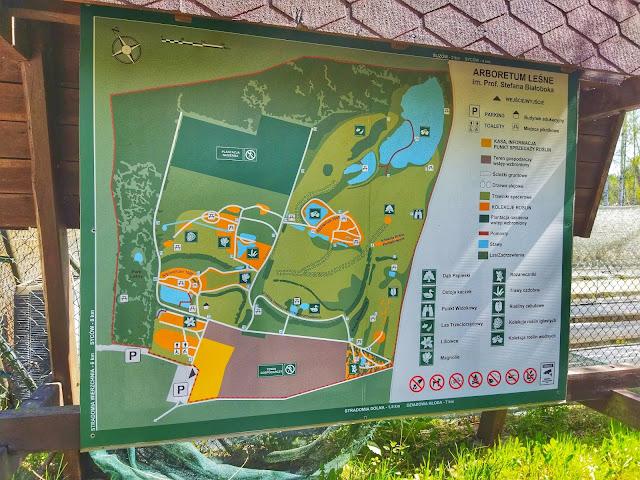 Plan Arboretum leśnego w Stradomii koło Sycowa