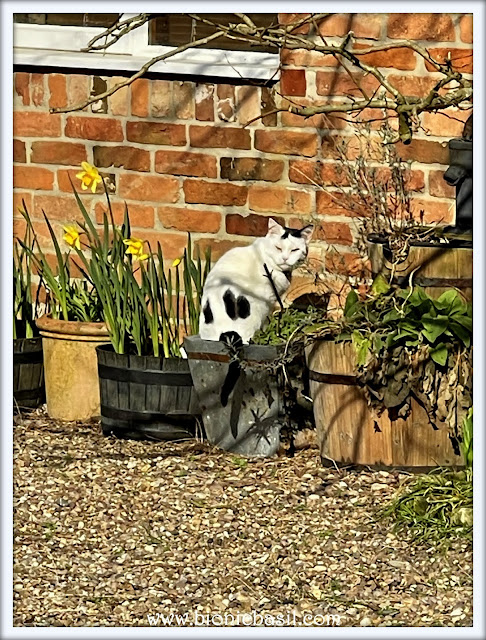 Sitting in Plant Pots with Smooch ©BionicBasil® The Pet Parade 395