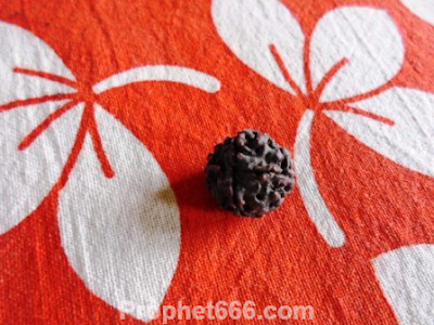 Traditional Rudraksha Therapy for Healing Worm and Bacteria  Infected Wounds