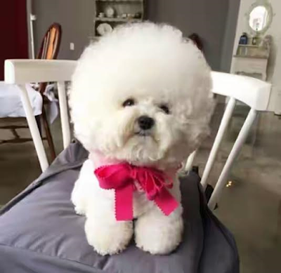 See Pics: This Cute Dog Who Has 79,000 Followers On Instagram