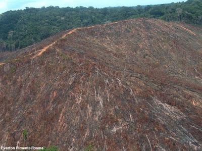 desmatamento na amazônia, jair bolsonaro, bolsonaro, Ricardo Salles, amazônia, desmatamento bate record, taxa de desmatamento, natureza