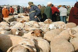 السجن 5 سنوات لسارق خروفين بأزمور