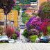 Veja! Conheça agora  31 árvores que você pode plantar em sua calçada, produzem frutos, sombras e flores, não destroem calçadas e nem danificam a rede elétrica