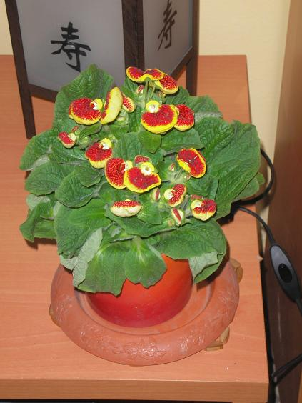 El jardin de pepa plantas de interior y cactus for Plantas de interior muy duraderas