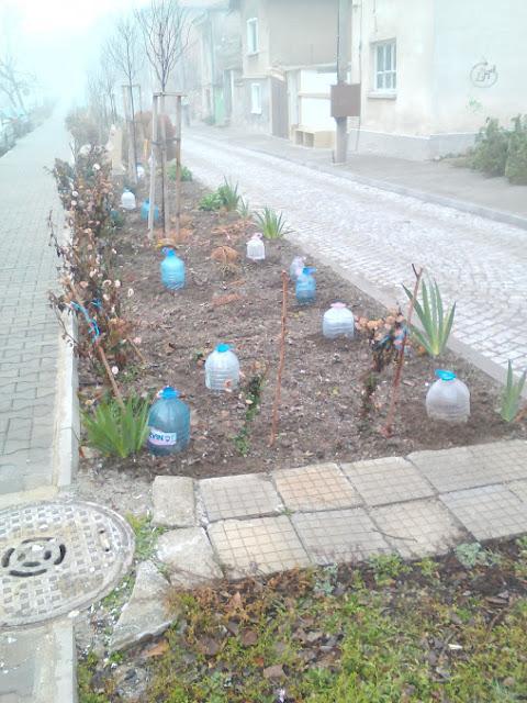 Plastic Bottles, Flower Garden, Yambol, frost, ice,