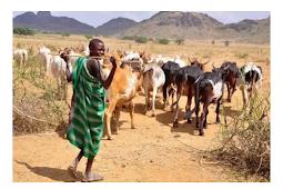 Opinion: Why Yorubas Should Allow Fulani's On Their Bush