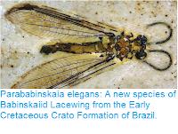 https://sciencythoughts.blogspot.com/2017/07/parababinskaia-elegans-new-species-of.html
