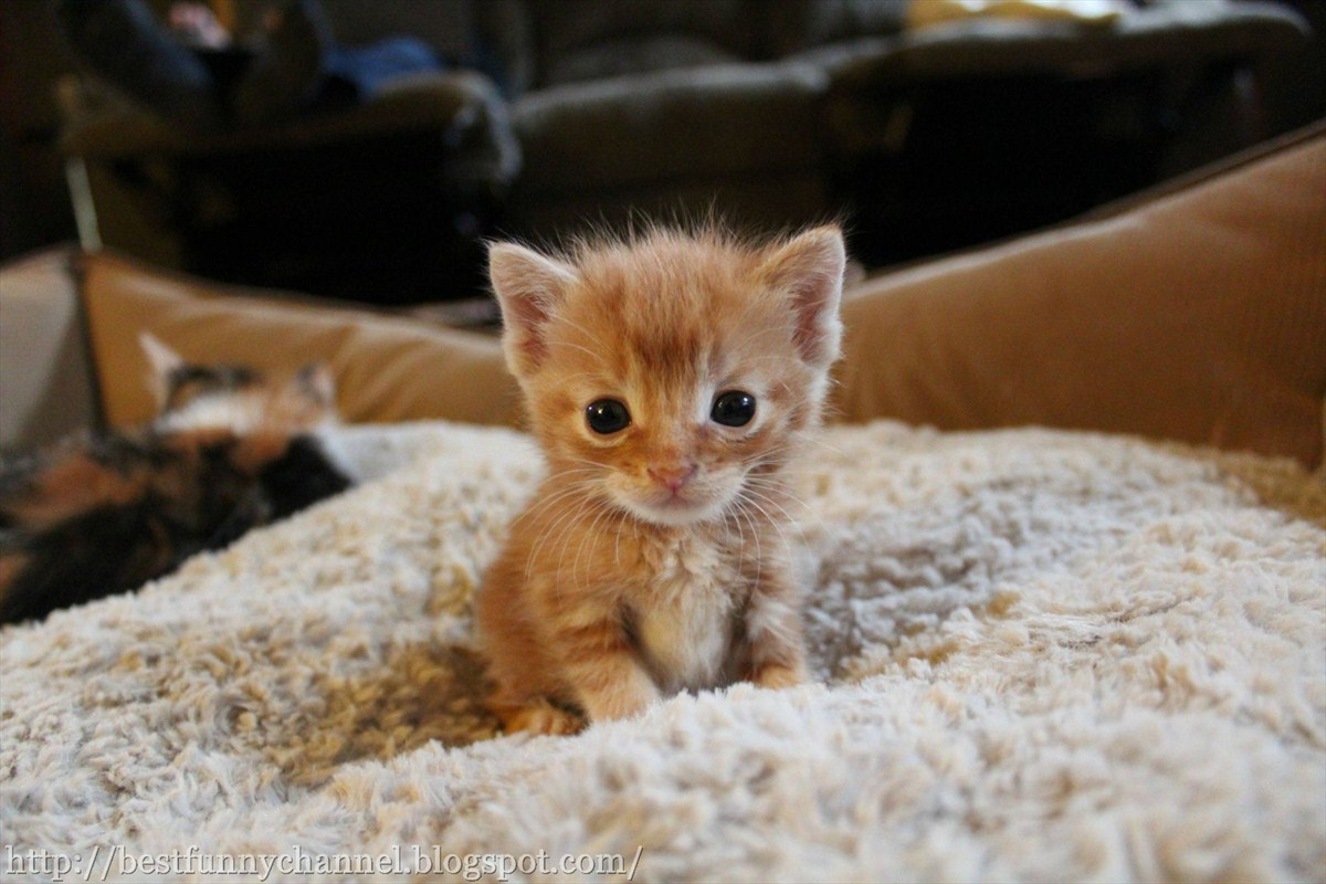 Super Cute Baby Cats Wallpaper Cute And Funny Pictures Of Animals 14