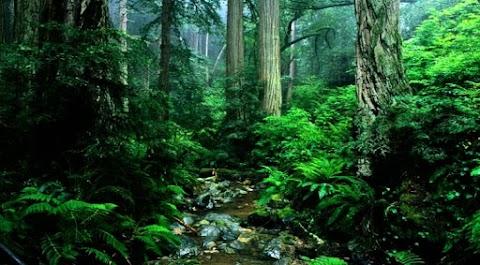 Hutan, Tentang Belukarmu Aku Rindu