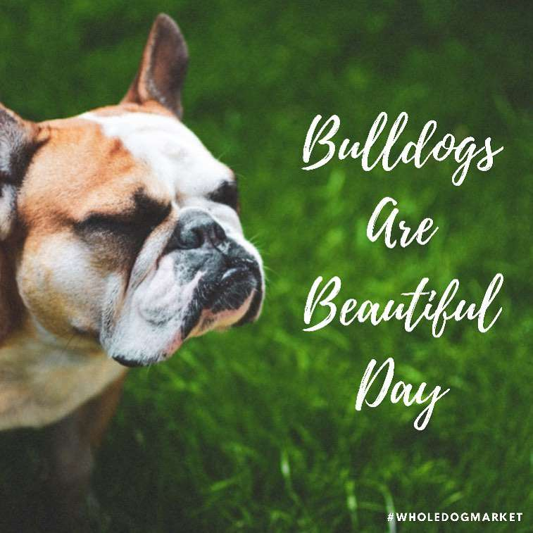 National Bulldogs Are Beautiful Day Wishes for Whatsapp