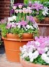 Συνδυασμοί Ανοιξιάτικων Φυτών σε Γλάστρες