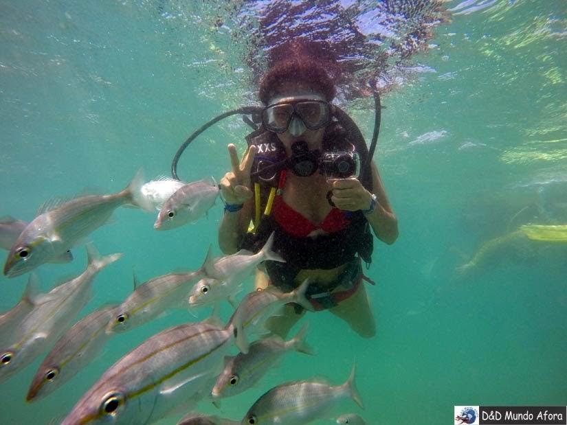 O que fazer em Natal - mergulho com cilindro em Maracajaú