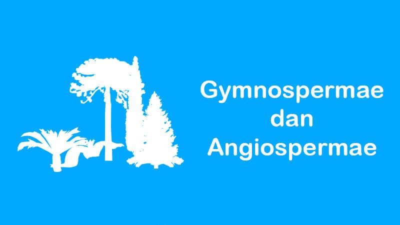 pengertian gymnospermae dan angiospermae