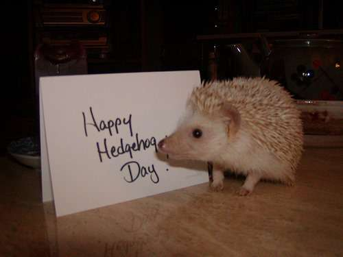 National Hedgehog Day Wishes Beautiful Image
