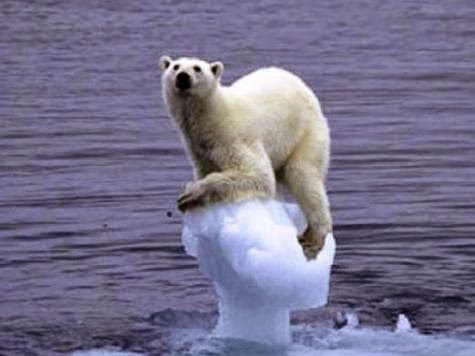Global warming, Polar bear