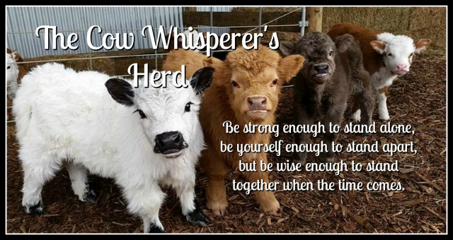Join My Team, The Cow Whisperer's Herd, Promotion, Stampin Up