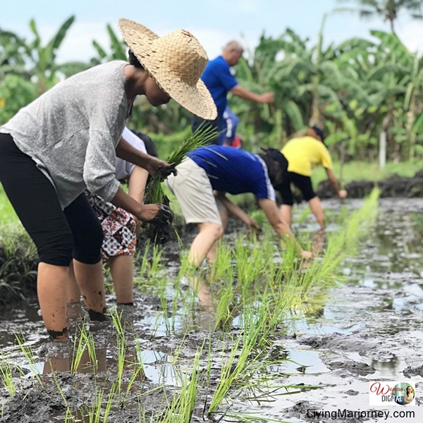 Agricultural Training Institute Learning Site in Mindanao