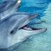 ΑΠΙΣΤΕΥΤΟ: Δελφίνια έβγαλαν στην ακτή εικόνα της Παναγίας! (photos)