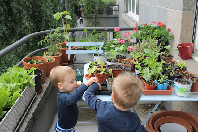 ... Balconies And It Doesnu0027t Take Much Effort To Grow A Few Vegetables To  Get Your Children Interested In Growing Their Own Food.