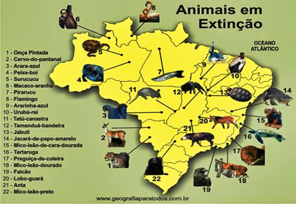 Fauna-Mapa