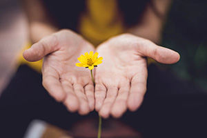 Hands together around single buttercup flower on stem