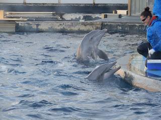 ジェノヴァ水族館のイルカの餌やり