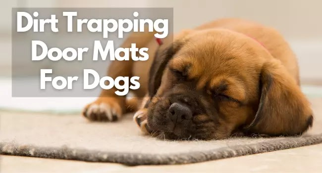 Best Dirt Trapping Door Mats For Dogs