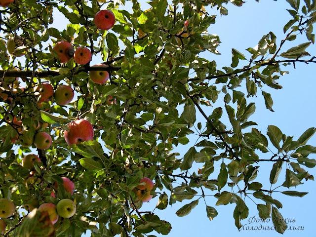 Яблочное небо