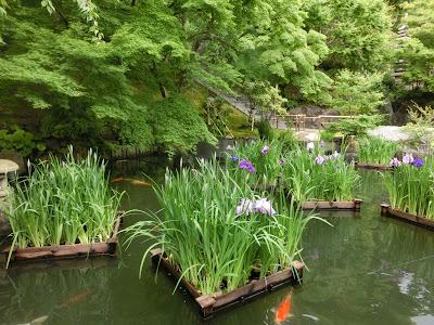 ハナショウブの筏
