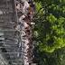 SIGUE FEA LA COSA!! Bien Común llama a salir a las calles frente a intento de reforma constitucional