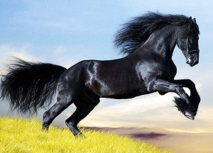 duniya-ke-sabse-mehnge-jaanwar-world-most-expensive-animals