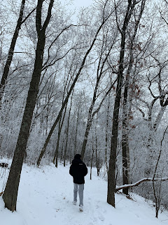 Person is walking on a snowy path. Snow is everywhere. There are tall trees and everything has frost on it so even the trees are white with some bark contrasting.