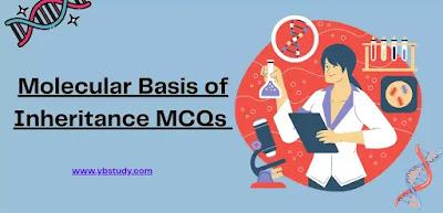 Mcq on Molecular Basis of Inheritance