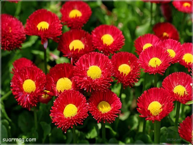 صور ورد - ورود جميلة 2 | Flowers Photos - Beautiful Roses 2