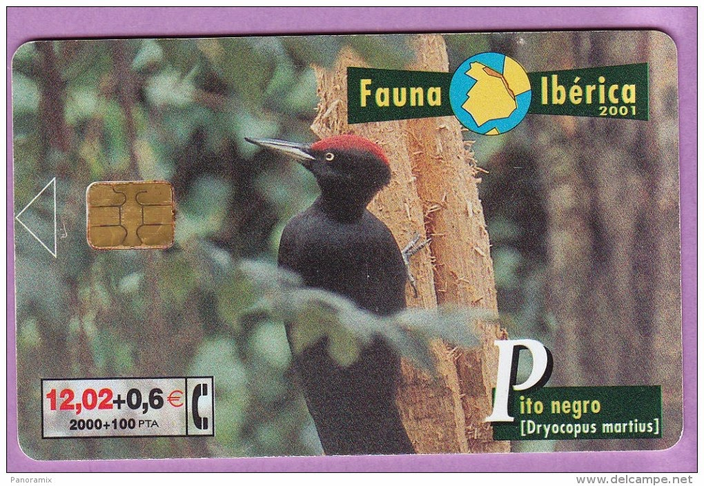 Tarjeta telefónica Pito negro (Dryocopus martius)