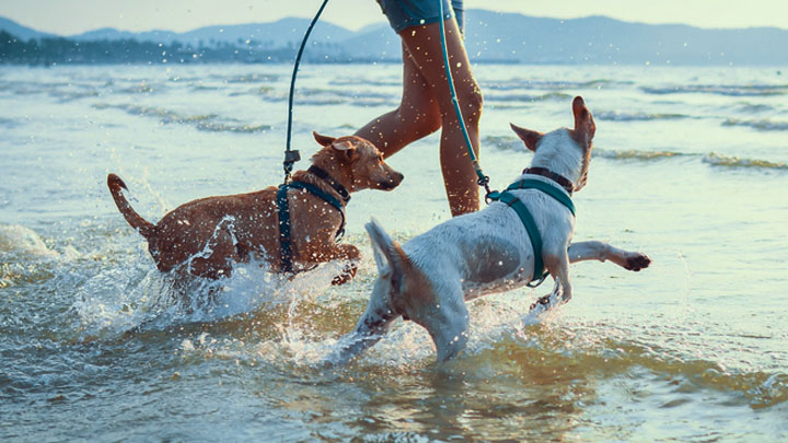 best pet friendly vacations