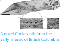 https://sciencythoughts.blogspot.com/2012/05/novel-coelacanth-from-early-triassic-of.html