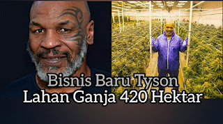 Bisnis Baru Mike Tyson 420 Hektar Lahan Ganja