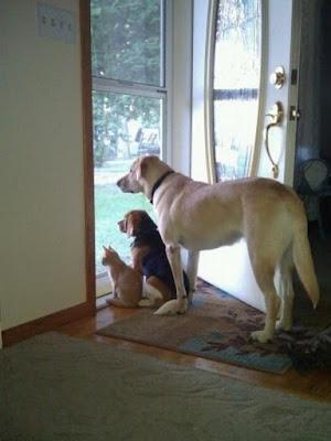 Los animales tienen una gran capacidad para captar las energías de un hogar.