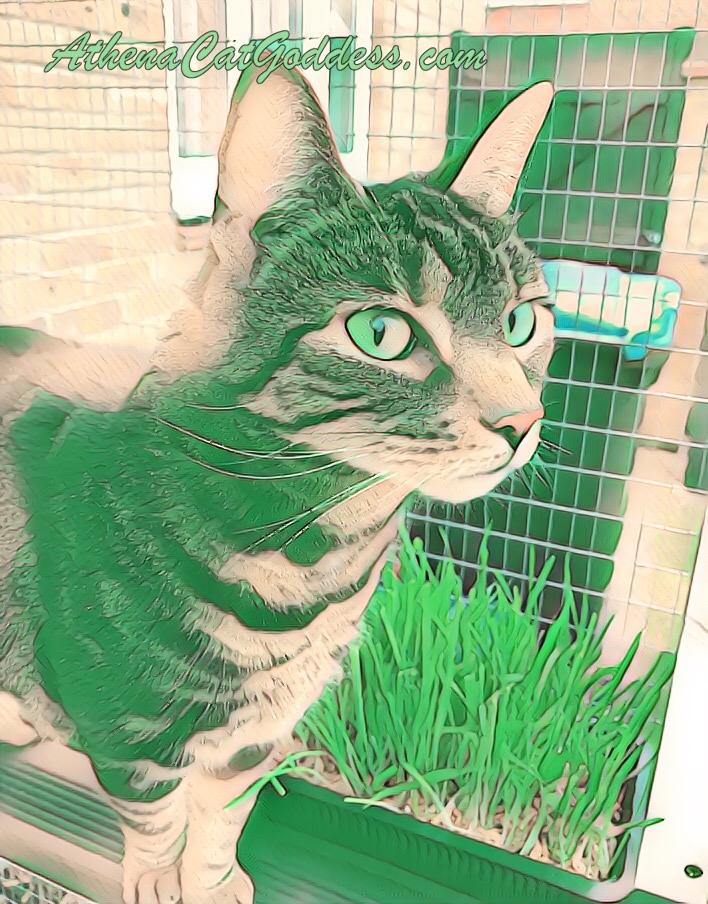 cat art photo using PicsArt app