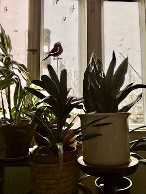 Pflanzen vor und Möwen hinter dem Fenster
