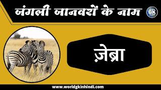 Zebra Animal Name In Hindi