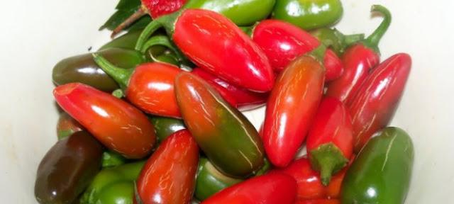 Sering dipakai dalam resep hidangan luar negeri, nyatanya cabai jalapeno punya banyak manfaat untuk kesehatan