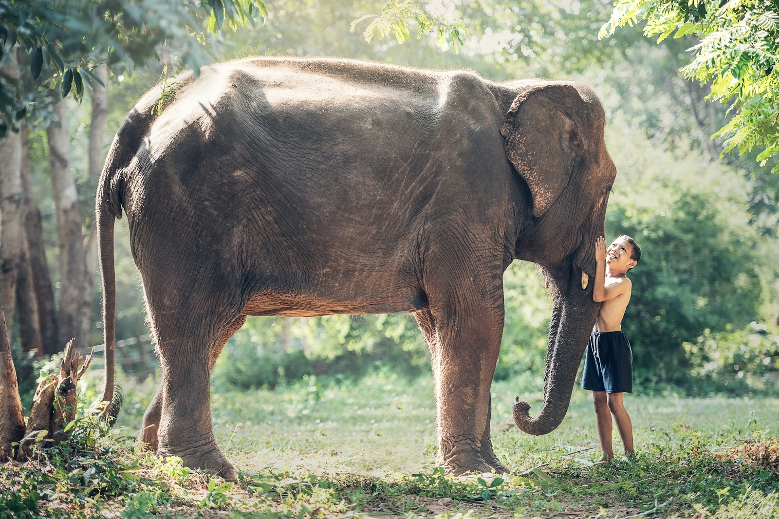A boy with his elephant friend.