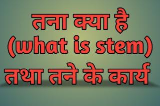 तना क्या है (what is stem)तथा तने के कार्य