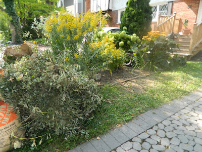 Toronto Deer Park summer garden clean up after by Paul Jung Gardening Services