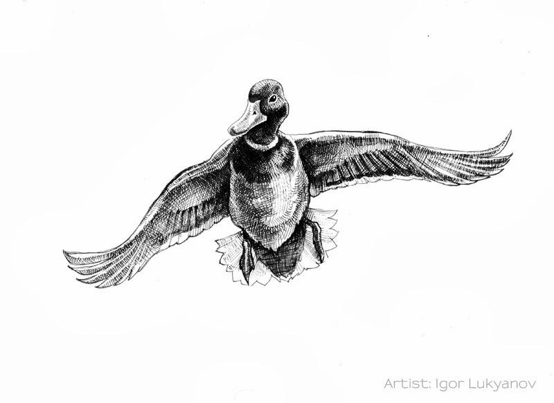Flying Bird Drawings