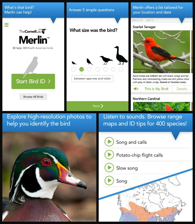 You Can Download A Bird ID App To Your Phone Or Tablet I Love The Merlin It Makes Identifying Birds Super Easy And Is Available For IOS